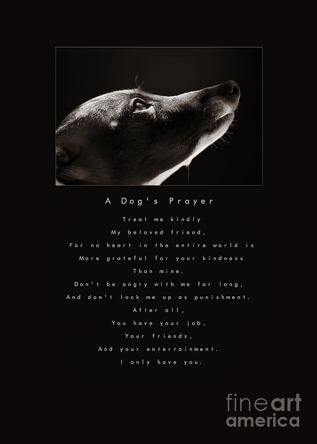 Adopt Photograph - A Dogs Prayer  A Popular Inspirational Portrait And Poem Featuring An Italian Greyhound Rescue by Angela Rath