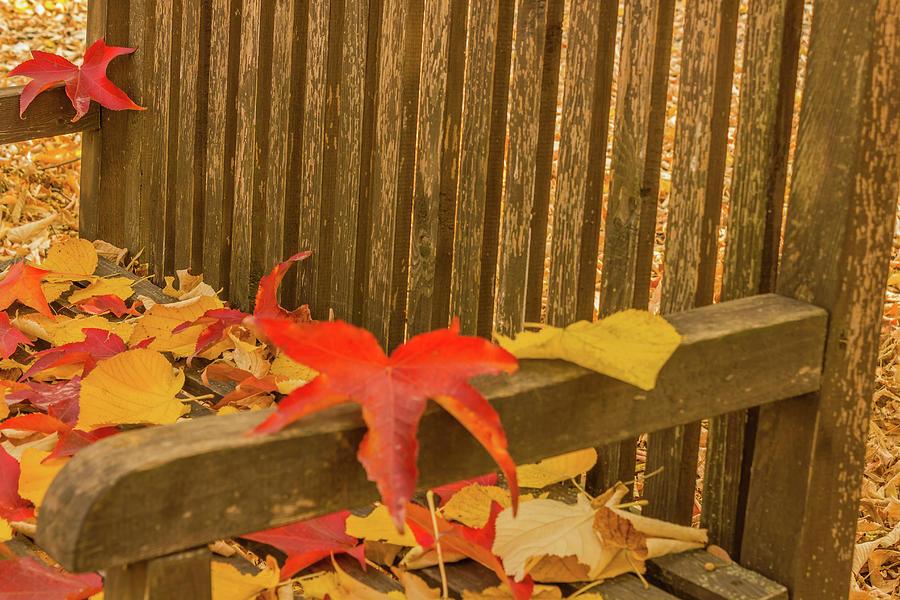 Autumn Photograph - A Foliage Pillow On A Bench In A Woodland by Susanna Mattioda