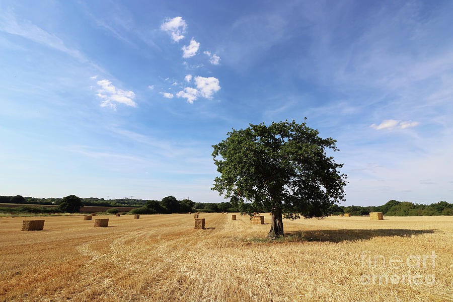 After the Harvest England by Julia Gavin