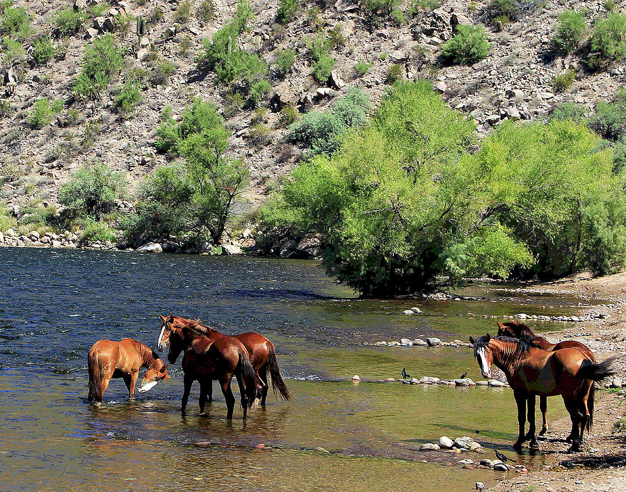 Arizona Wild Horses by Matalyn Gardner