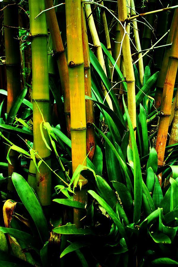 Gardens By Maria: Bamboo Garden Photograph By Maria Young