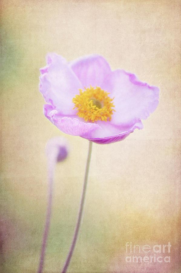 Flower Photograph - Beauty by Angela Doelling AD DESIGN Photo and PhotoArt
