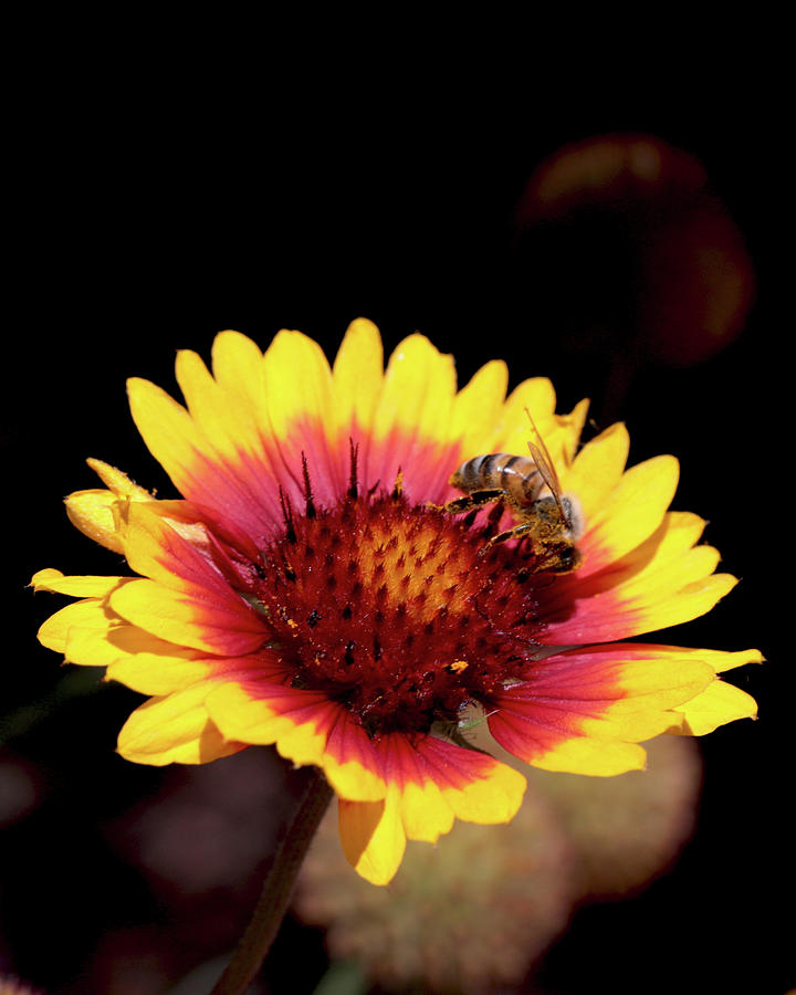 Bee Photograph - Bee On Flower by Michael Riley