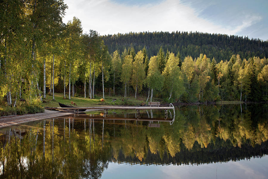 Birches And Reflection Photograph