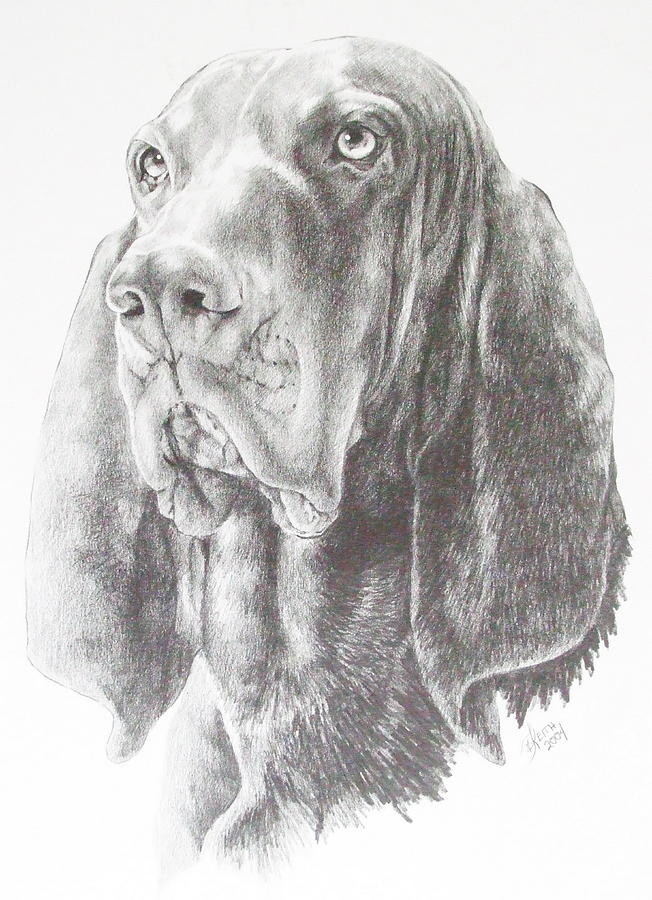 Purebred Dogs Drawing - Black And Tan Coonhound by Barbara Keith