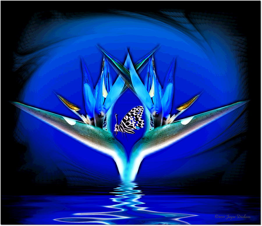 Bird Of Paradise Digital Art - Blue Bird Of Paradise by Joyce Dickens