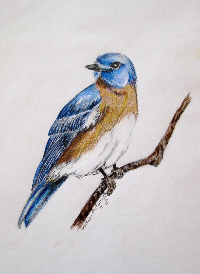 Bluebird Guardian Drawing By Kathrine McMurray