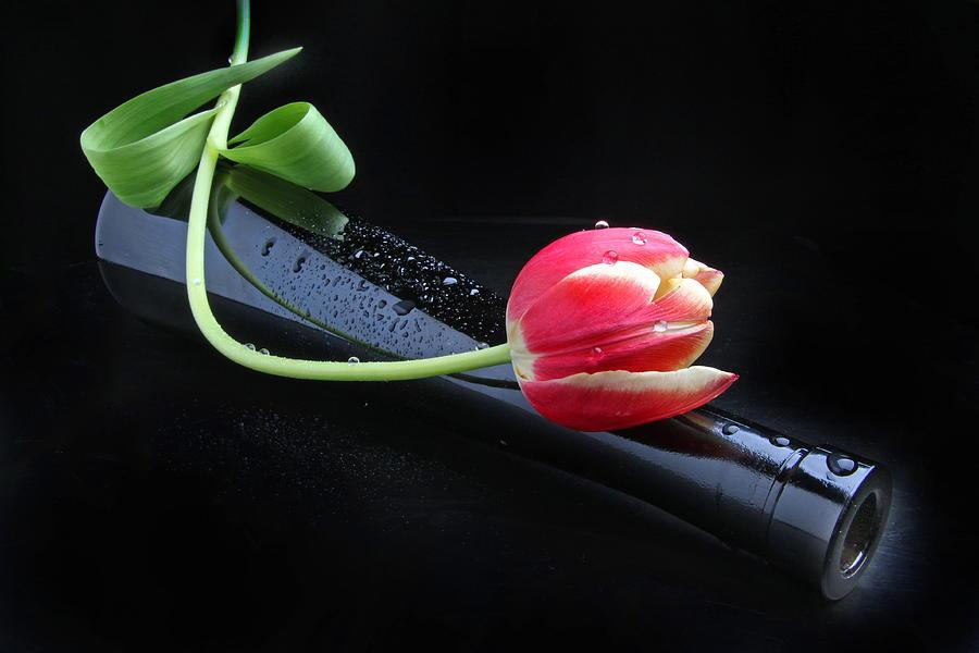 Tulip Photograph - Boheme by Manfred Lutzius