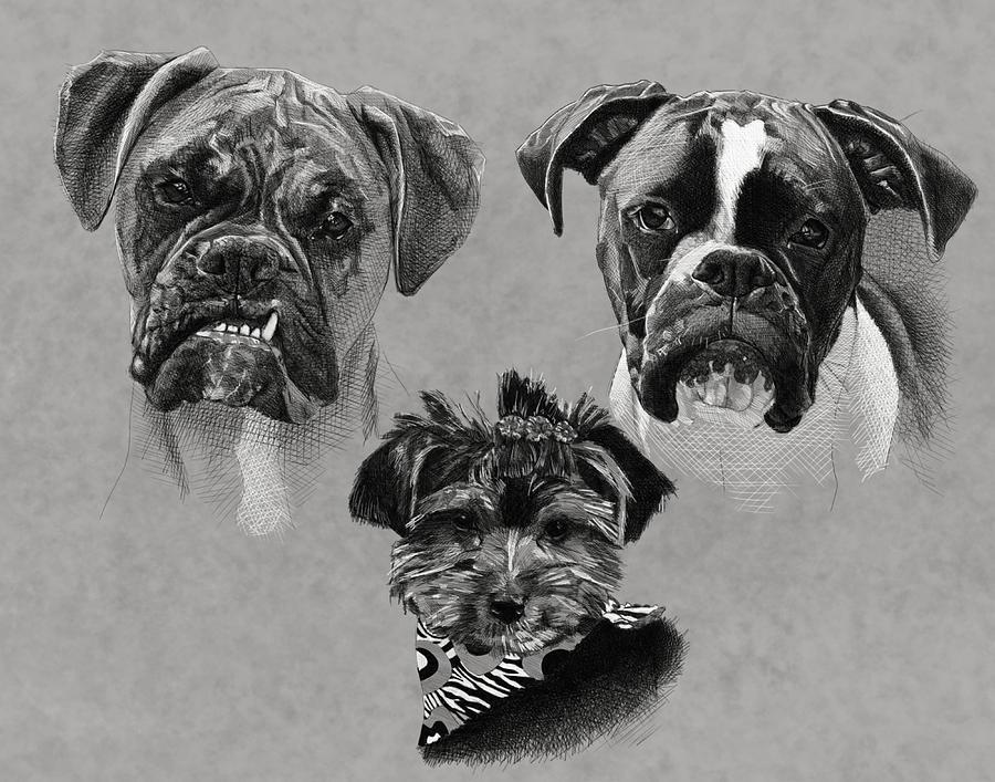 Boxer Digital Art - 2 Boxers 1 Yorkie by Myke  Irving