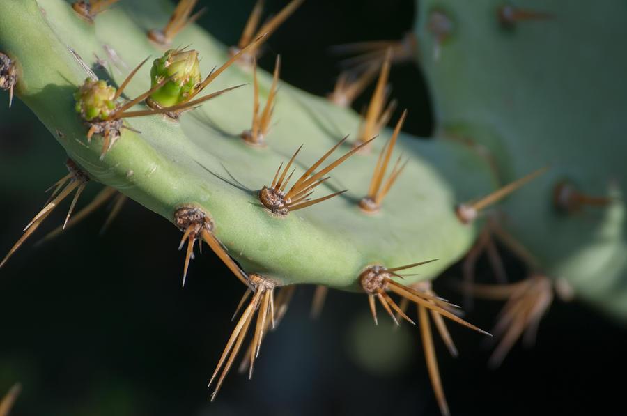 Cactus At Tulum Ruins Digital Art