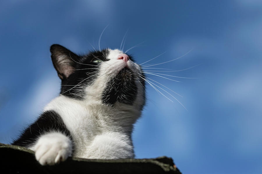Cat Art Photograph