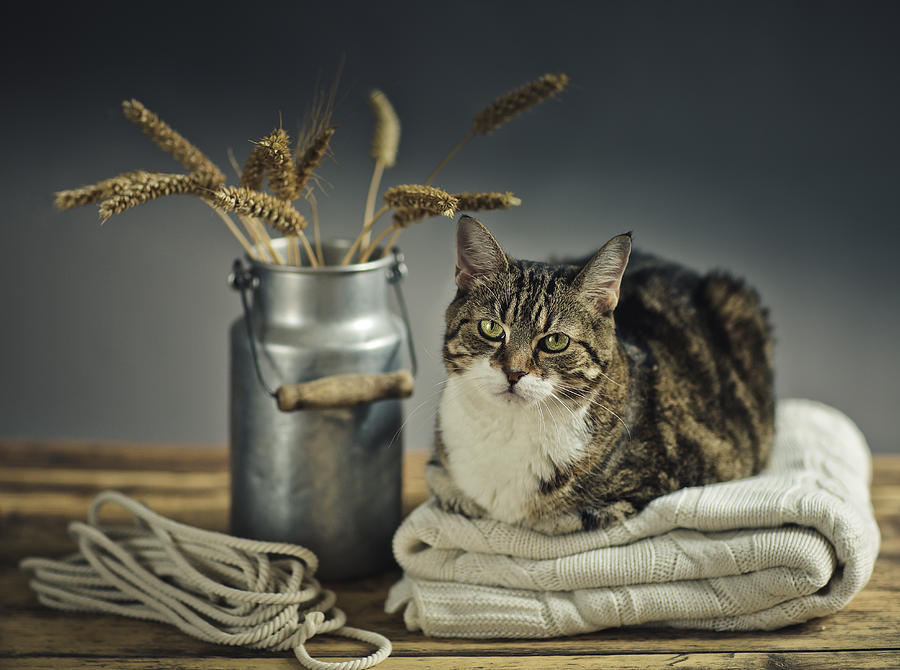 Cat Photograph - Cat Portrait by Nailia Schwarz