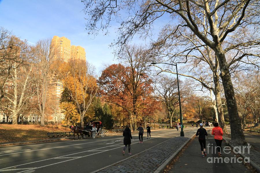 Destination Photograph - Central Park New York City by Douglas Sacha
