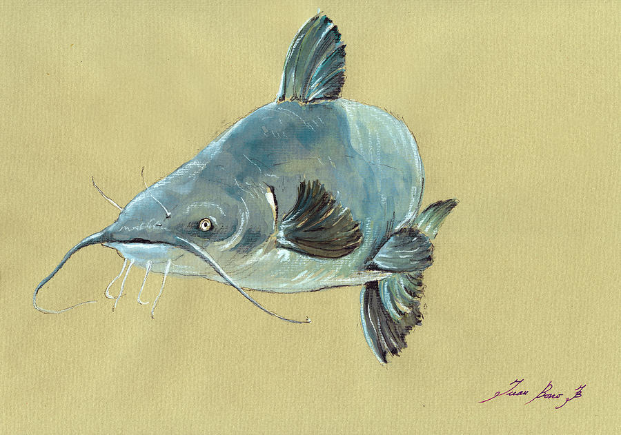 Channel Catfish Painting - Channel Catfish fish animal watercolor painting by Juan  Bosco