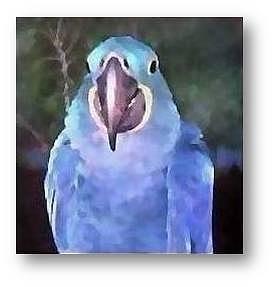 Macaws Mixed Media - Claudette by Brenda Garacci