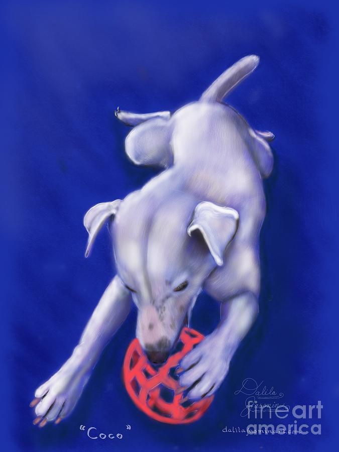 Dog Digital Art - Coco by Dalila Jasmin