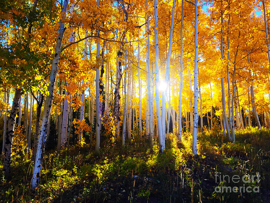 Colorado Autumn by Kate Avery