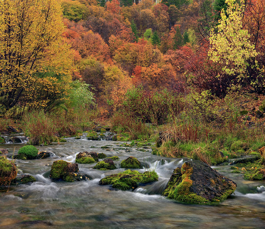 Appealing Photograph - Cub River Autumn by Leland D Howard