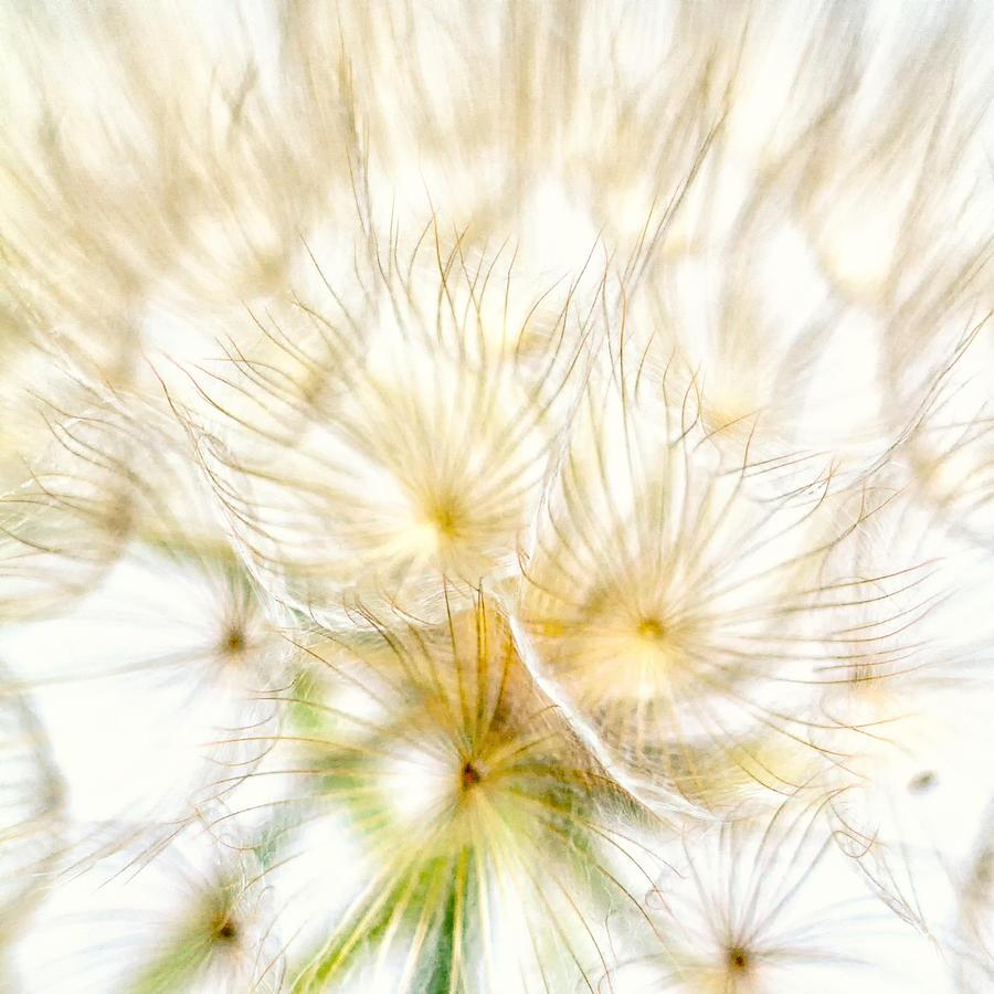 Nature Photograph - Dandelion by Stelios Kleanthous