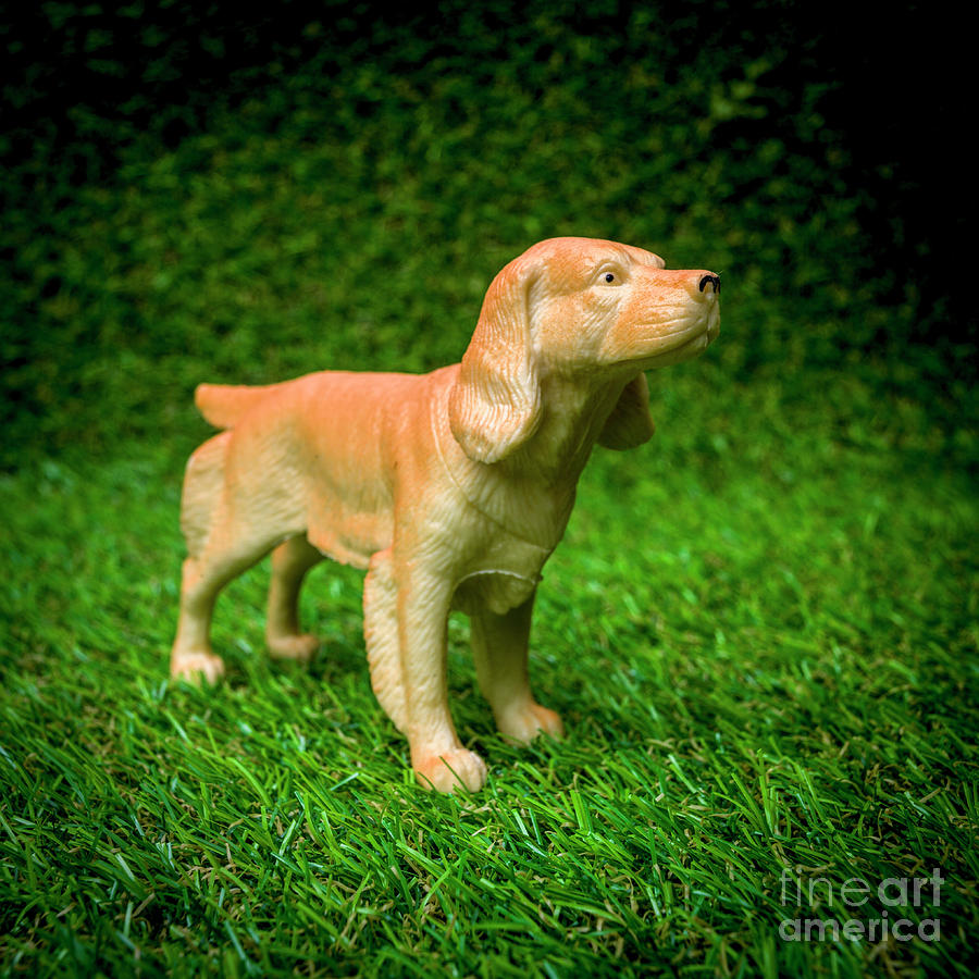 Figurine Photograph - Dog Figurine by Bernard Jaubert