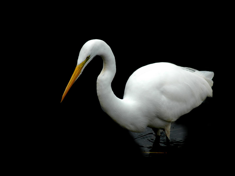 Egret by David Weeks