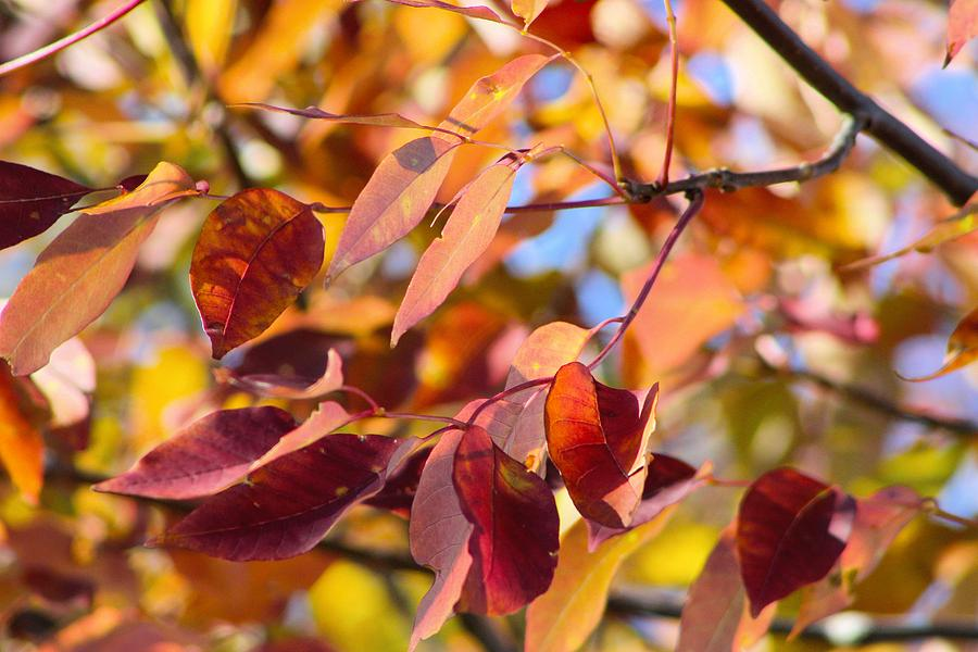 Fall Colors Photograph