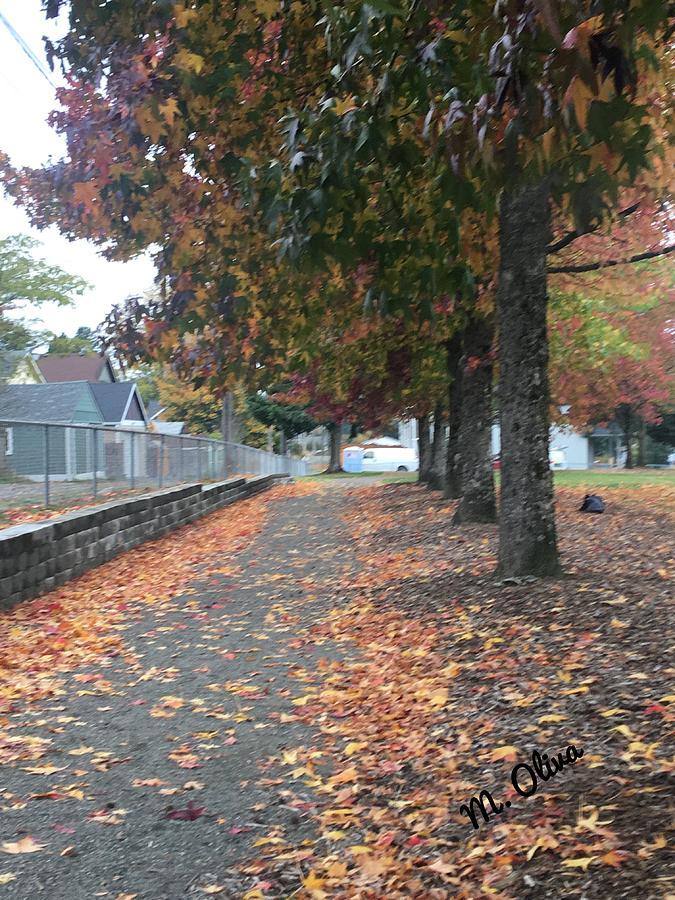 Fall Photograph - Fall by Mary O