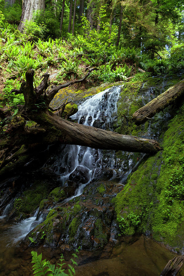 Falls Photograph - Fern Falls At Jedediah Redwoods State Park by Rick Pisio