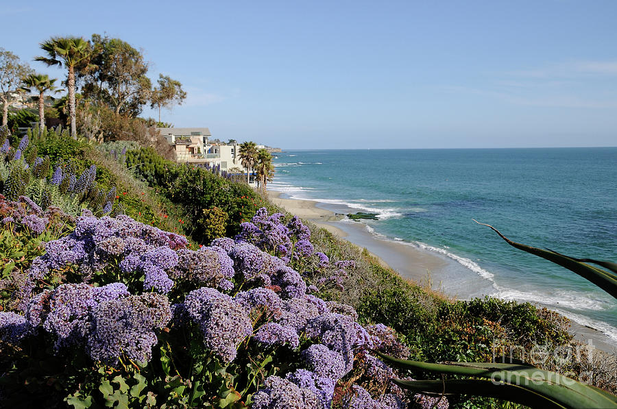 Flowers Photograph - Flowers At The Beach by Timothy OLeary