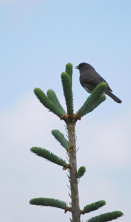 Bird Photograph - Free by Patricia Motley