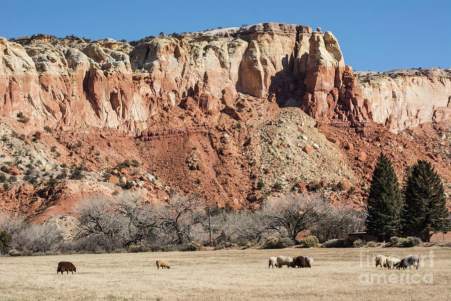 Ghost Ranch by John Greco