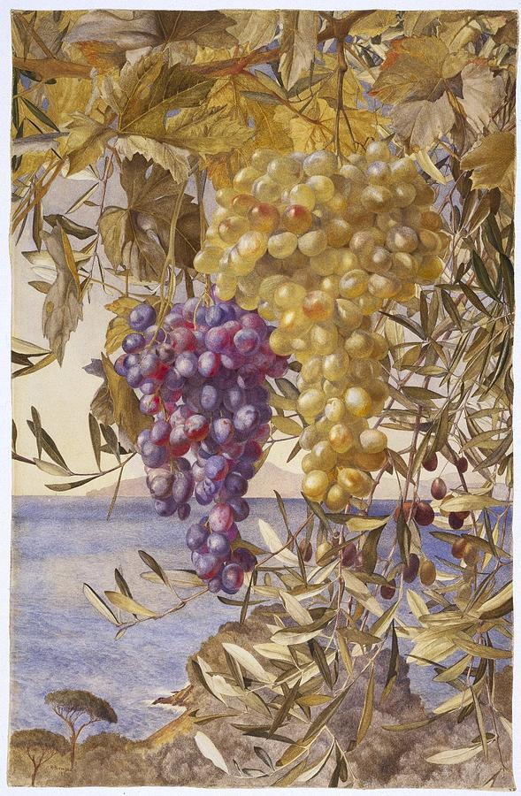 1878 Painting - Grapes And Olives by MotionAge Designs