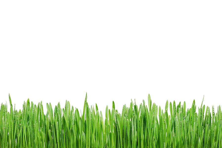 Grass Photograph - Green Grass by Tilen Hrovatic
