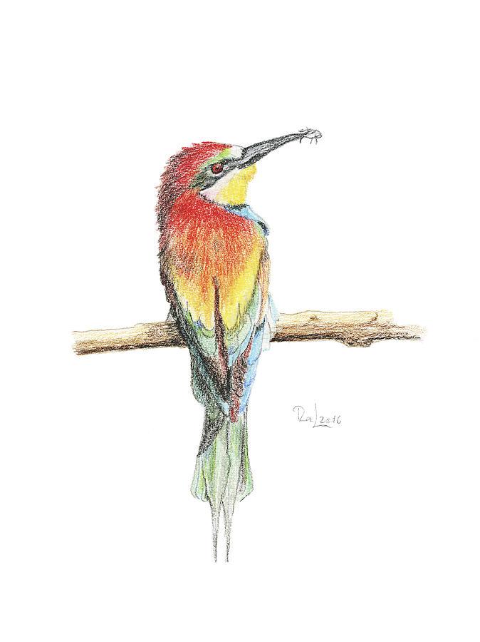 Gruccione - Bee Eater - Merops Apiaster by Raffaella Lunelli