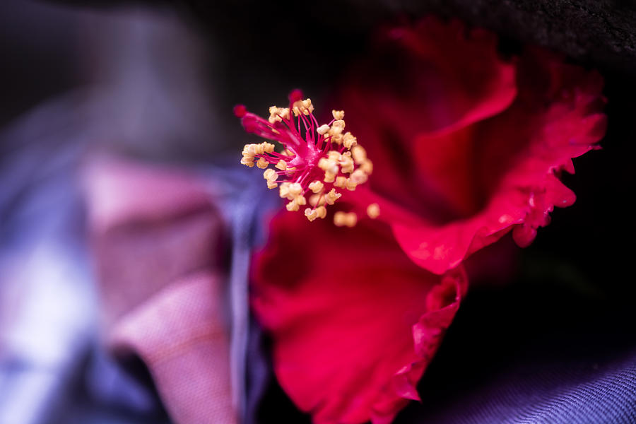 Architecture Photograph - Hibiscus Flower by Jijo George