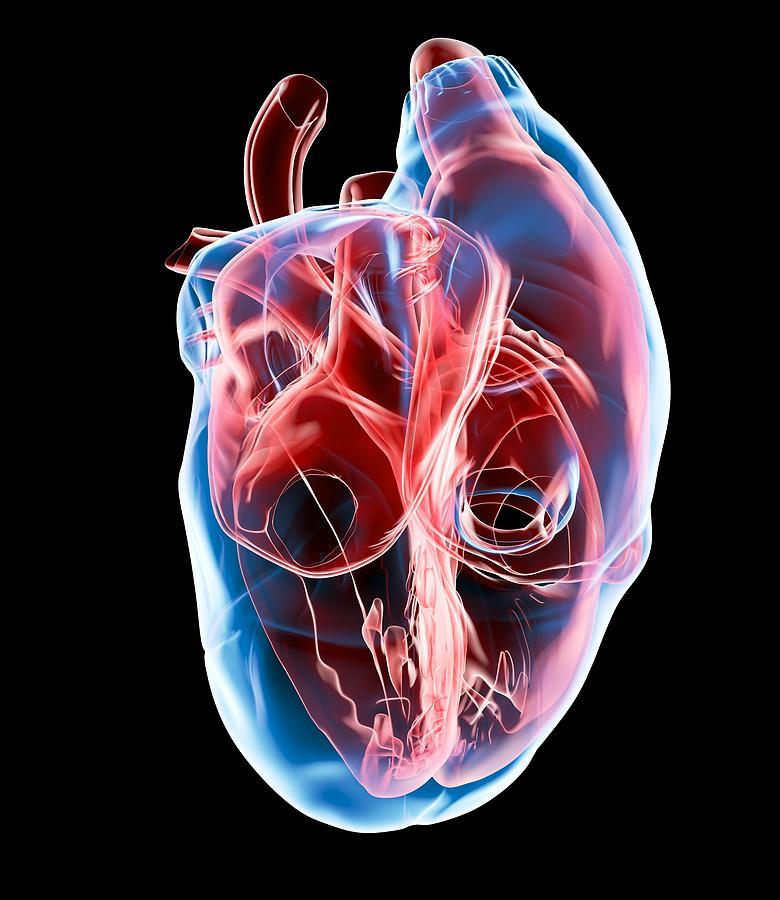 Human Heart Artwork 2