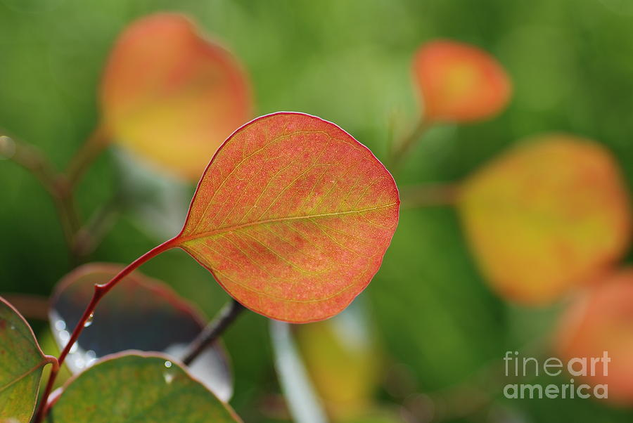 Macro Photograph - Leaf by Catherine Lau