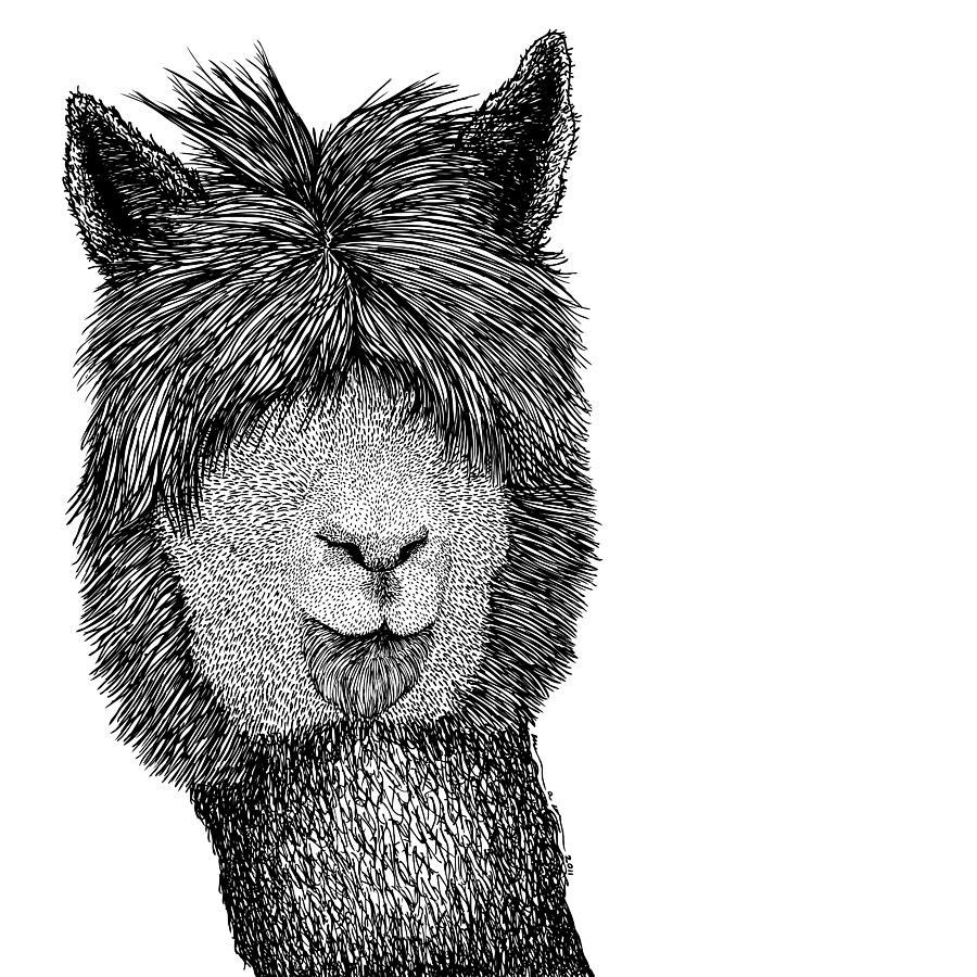 Drawn Drawing - Llama by Karl Addison