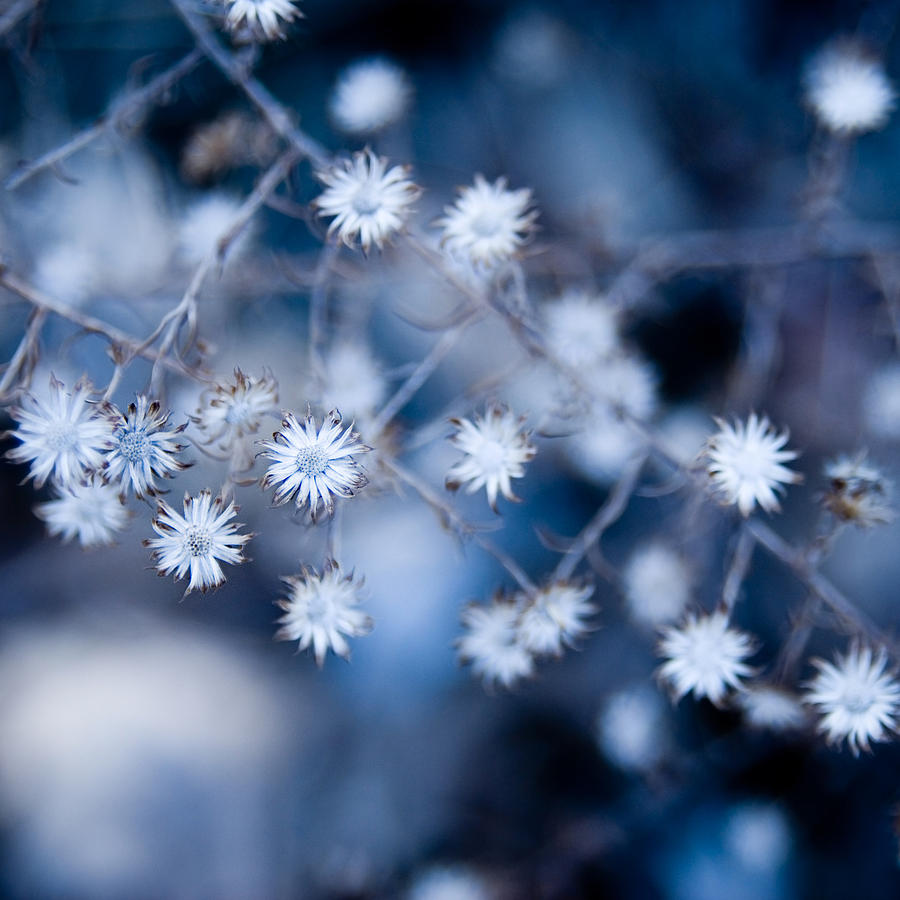 Flower Photograph - Lonely Winter by Ryan Heffron