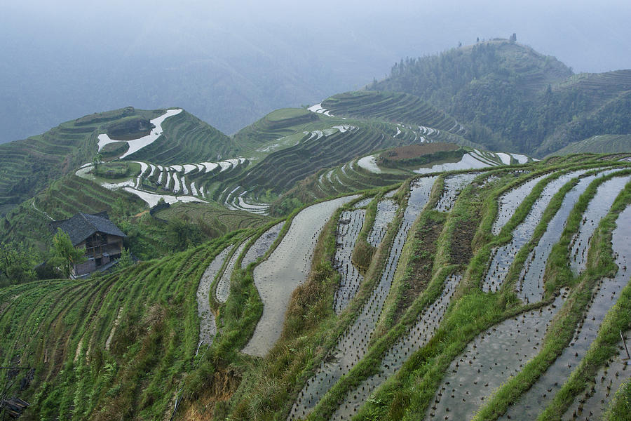 Asia Photograph - Longsheng Rice Terraces by Michele Burgess