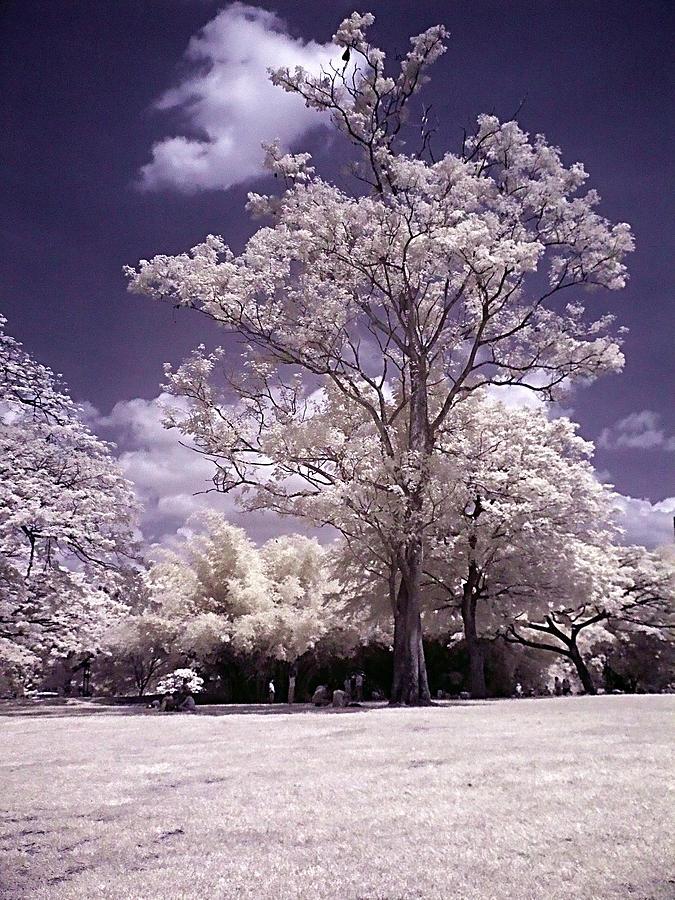 Infrared Photograph - Magic Garden  by Galeria Trompiz