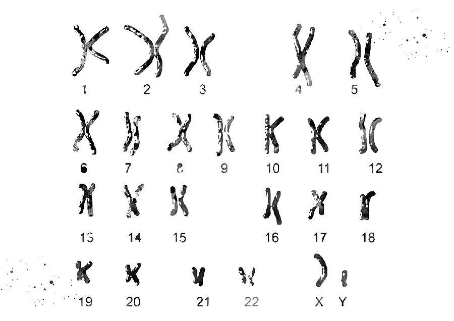 Chromosome idiogram watercolor print human karyotype genetic art print biology art chromosomes pair poster 46 chromosomes illustration 393
