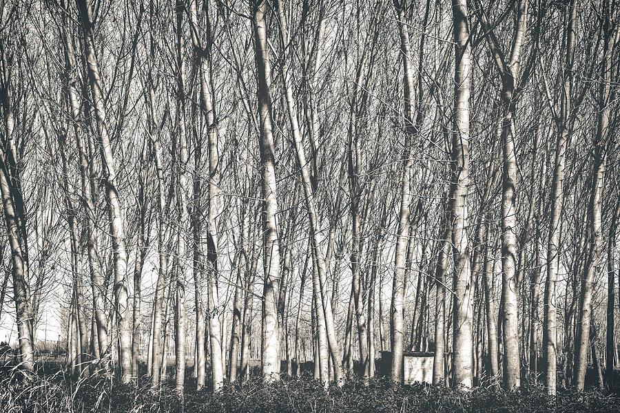 Autumn Photograph - Memories by Sotiris Filippou