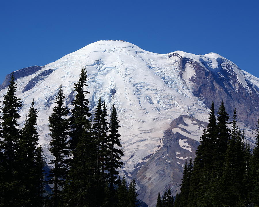 National Park Photograph - Mount Rainier by Sonja Anderson