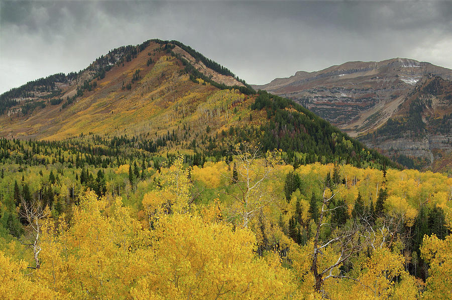 Uinta-wasatch-cache National Forest Photograph - Mount Timpanogos Fall Colors by Dean Hueber