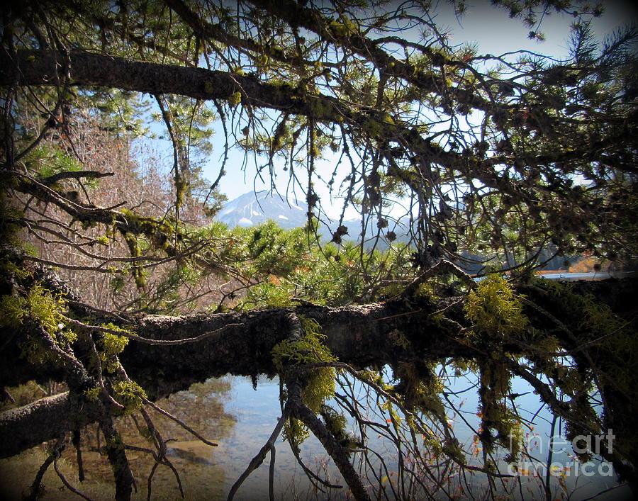 Lake Photograph - Mt. Lassen and Manzanita Lake by Joy Patzner