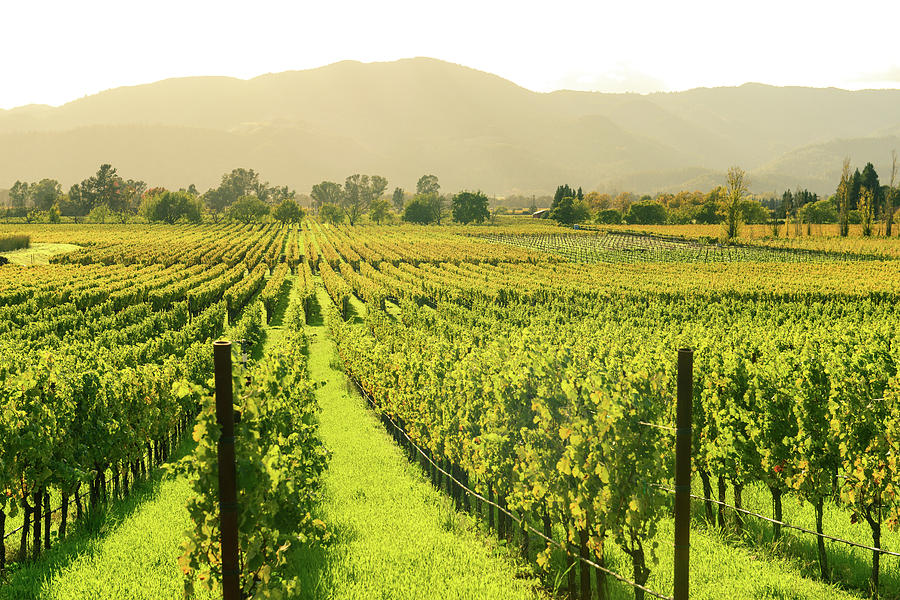 Napa Valley in Autumn by Brandon Bourdages