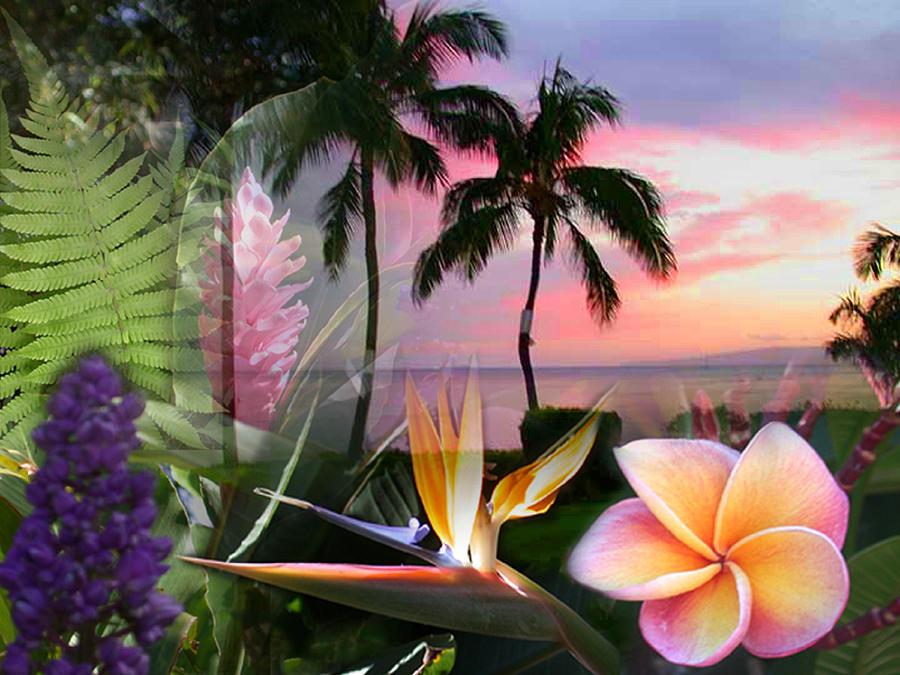 Bird Of Paradise Photograph - Natural Beauty by Angie Hamlin