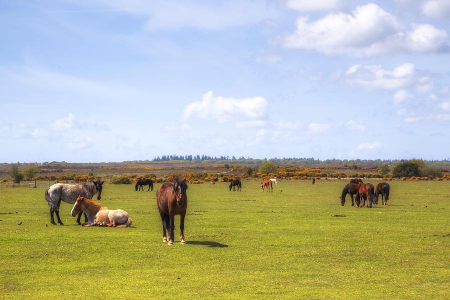 Pony Photograph - New Forest - Hampshire - Uk by Joana Kruse
