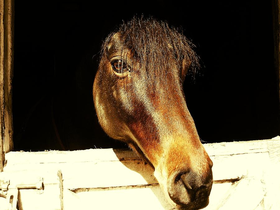 Equine Photograph - Noble Stallion by JAMART Photography